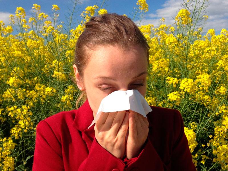 alergias durante todo el año